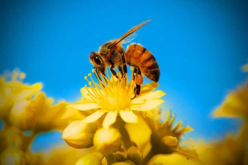 What are the benefits of bees?