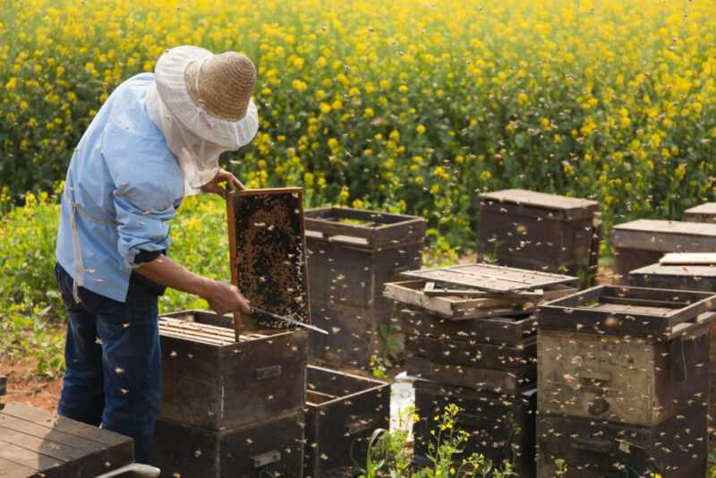 What are the varieties and types of honey: medicinal properties and their characteristics