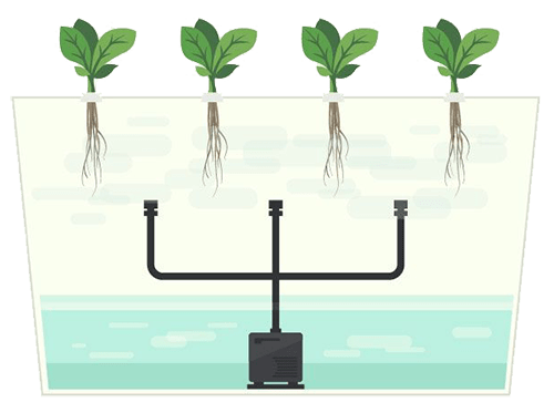 What is aeroponics and how is it applied