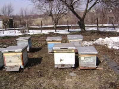 When to take bees out of the winter house?
