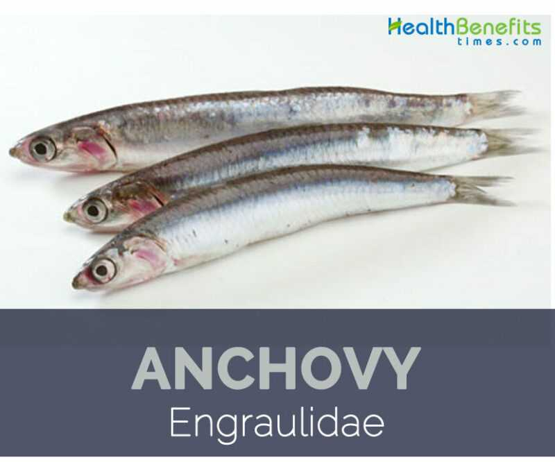Anchovy benefits, properties, calorie content, useful properties and harm