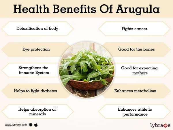 Arugula, Calories, benefits and harms, Useful properties