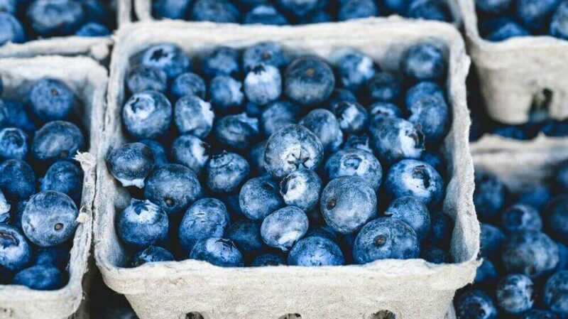 Blueberries, Calories, benefits and harms, Useful properties