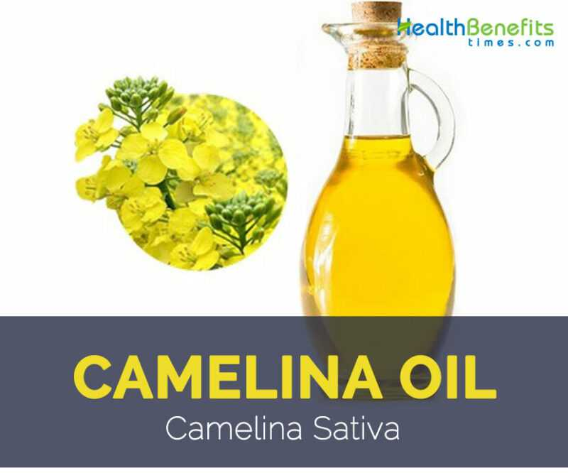 Camelina oil, Calories, benefits and harms, Useful properties