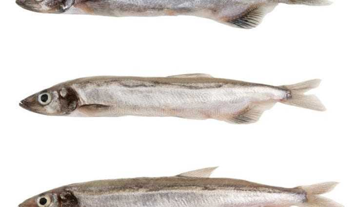 Capelin, Calories, benefits and harms, Useful properties