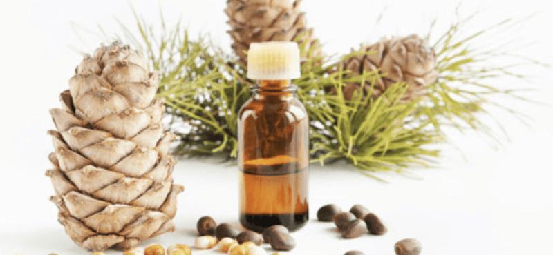 Cedar nut oil, Calories, benefits and harms, Useful properties