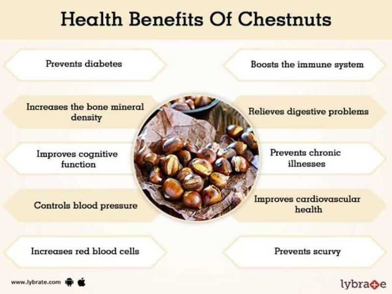 Chestnut, Calories, benefits and harms, Useful properties