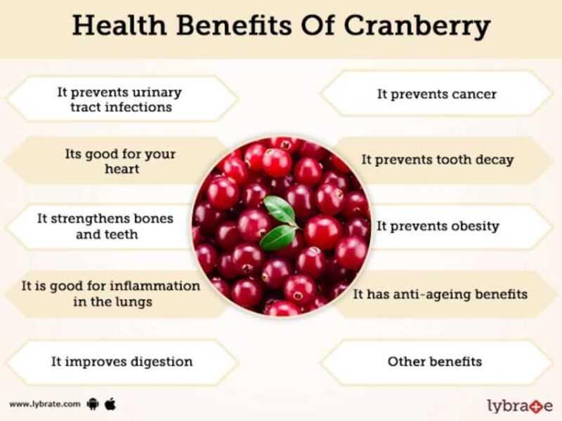 Cranberries, Calories, benefits and harms, Benefits