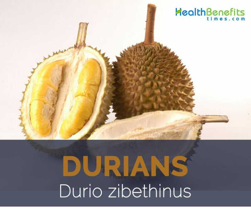 Durian, Calories, benefits and harms, Useful properties