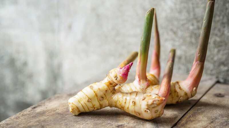 Galangal, Calories, benefits and harms, Useful properties