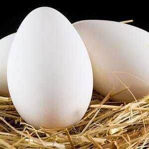 Goose, Calories, benefits and harms, Useful properties