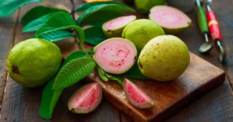 Guava, Calories, benefits and harms, Benefits