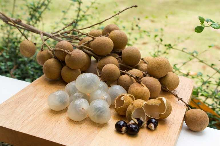 Longan (Lam Yai), Calories, benefits and harms, Benefits