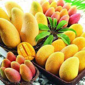 Mango, Calories, benefits and harms, Benefits