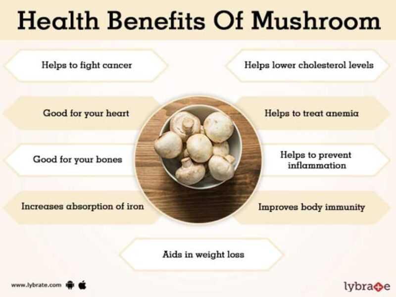 Milk mushrooms, Calories, benefits and harms, Useful properties