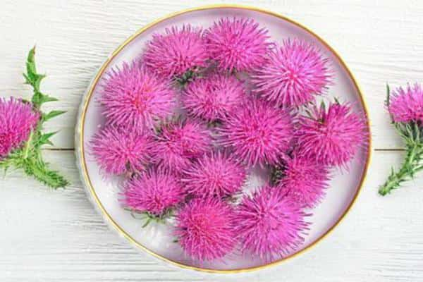Milk thistle oil, Calories, benefits and harms, Useful properties