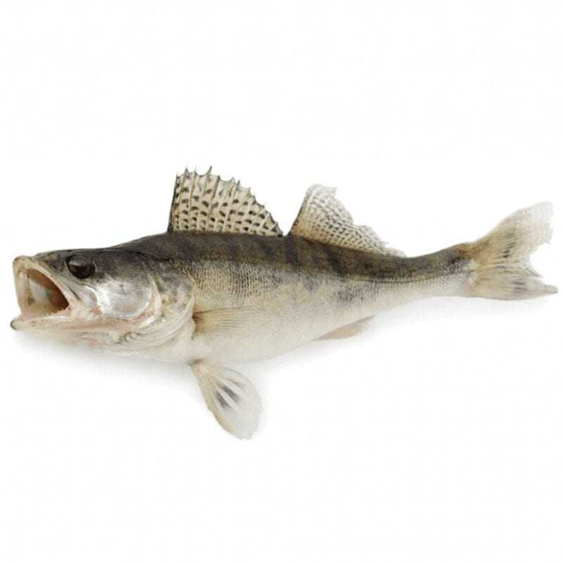 Perch, Calories, benefits and harms, Useful properties
