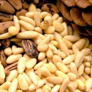Pine nut, Calories, benefits and harm, Useful properties