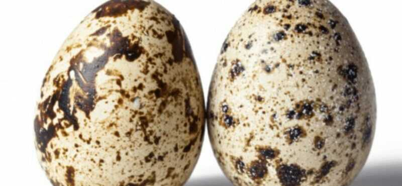 Quail egg, Calories, benefits and harms, Useful properties