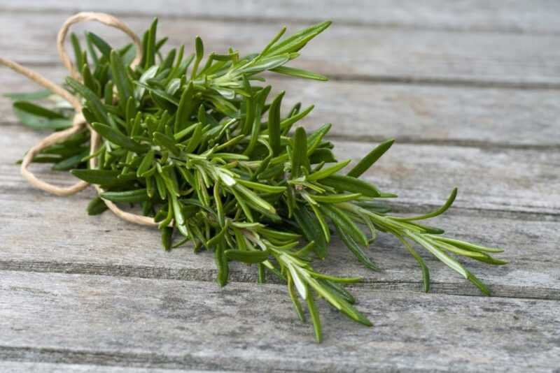 Rosemary, Calories, benefits and harms, Benefits
