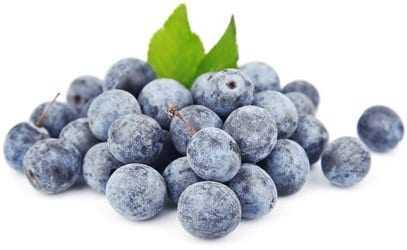 Sloe, Calories, benefits and harms, Useful properties