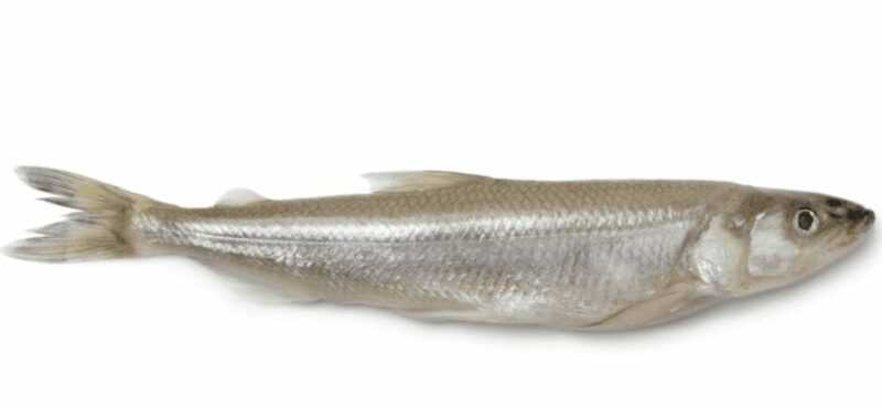 Smelt, Calories, benefits and harms, Useful properties