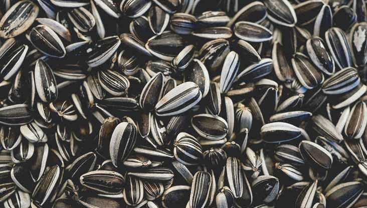 Sunflower seeds, Calories, benefits and harms, Useful properties