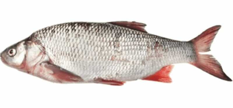 Tench, Calories, benefits and harms, Useful properties