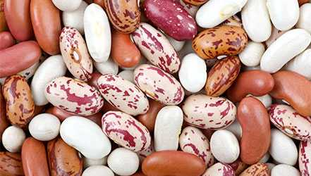 Beans useful properties, composition and contraindications (+ 20 photos), Calories, benefits and harms, Useful properties