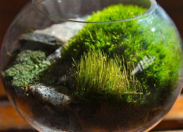 Moss in the terrarium