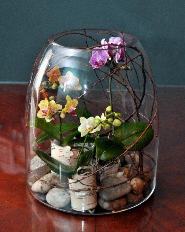 Orchids in the terrarium