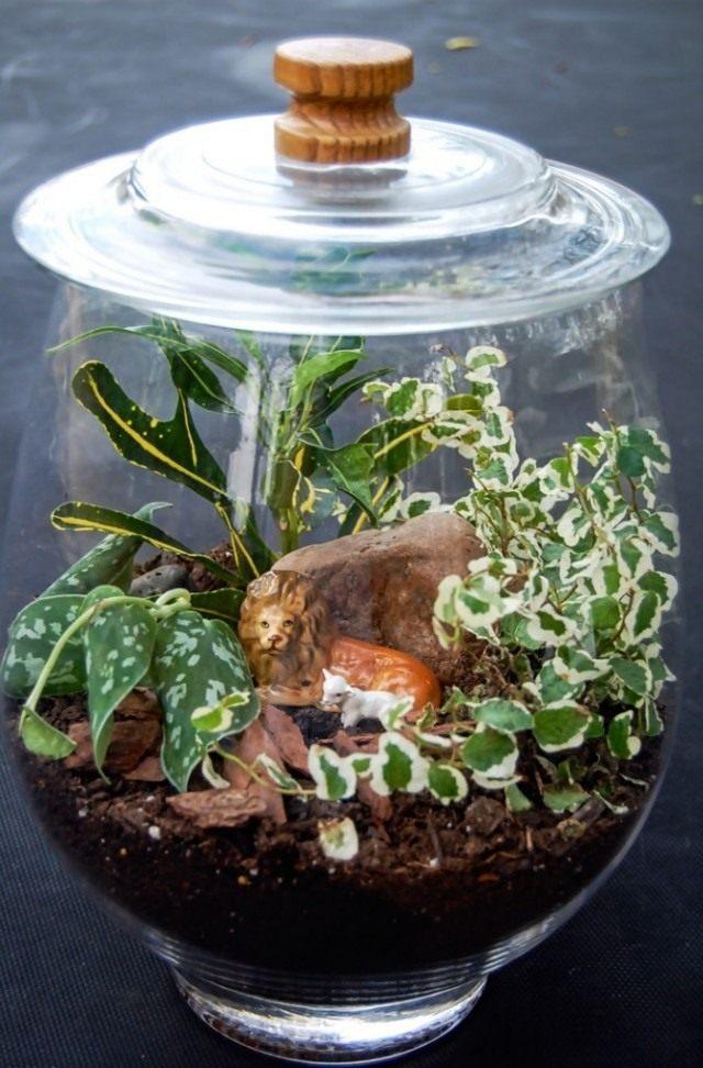 Croton in the terrarium