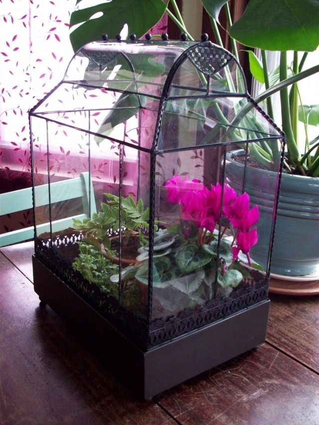 Cyclamen in the terrarium