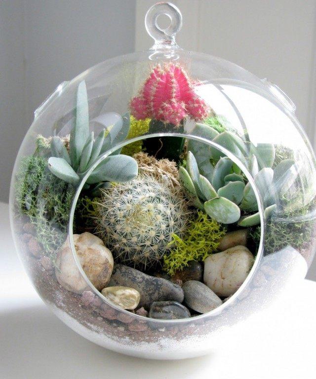 Cacti in the terrarium
