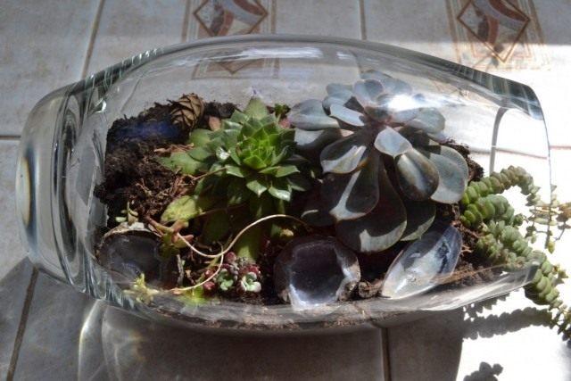 Rejuvenated in the terrarium