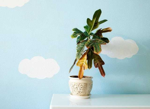 25 Indoor Plant Problems That Can Be Identified By Leaves - Care