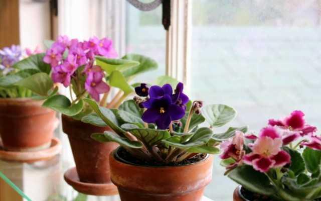 5 Best Blooming Indoor Plants for Nordic Windows - Beautiful Indoor Plants