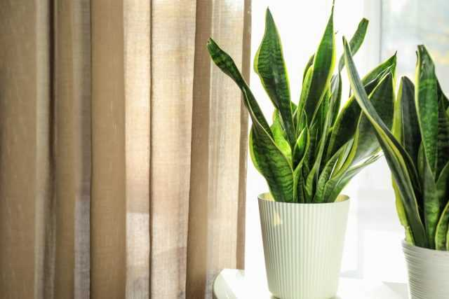 8 Houseplants That Are Not Afraid of Drafts - Care