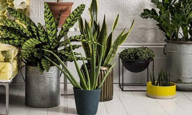 8 best indoor filter plants