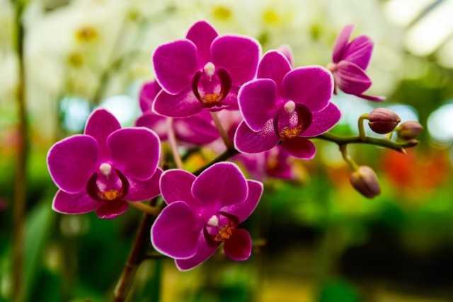 """Aminosol for Orchids"" – a liquid organic fertilizer with a full complex of amino acids – Beautiful indoor plants"