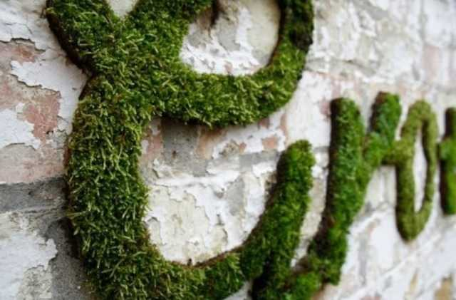 Do-it-yourself living paintings of moss – care