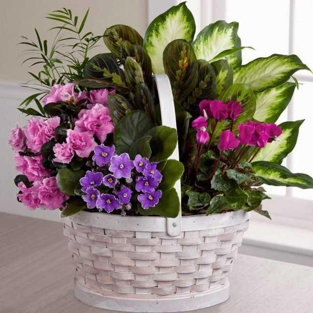 Flower arrangement on the windowsill care