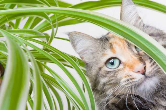 How to protect houseplants from cats?