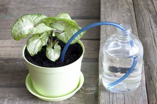 How to water flowers when you are on vacation - care