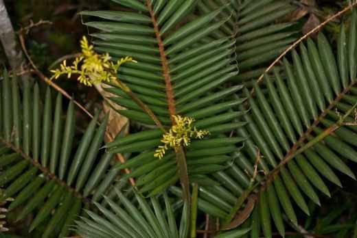 Palms grow slowly ... - care