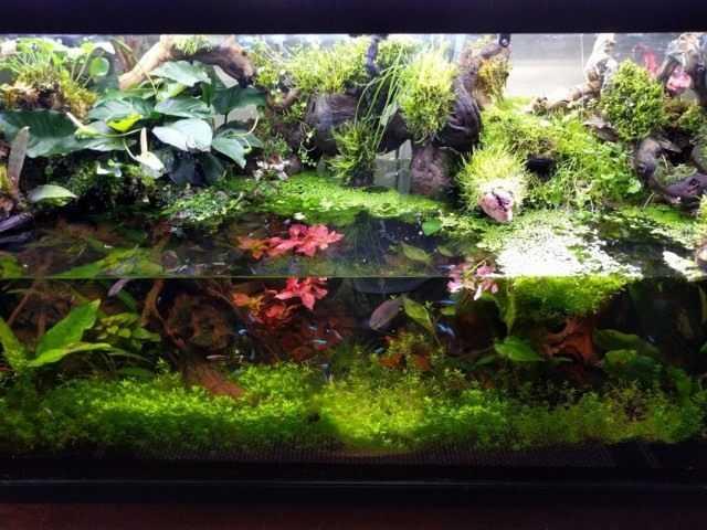 Paludarium - indoor water garden
