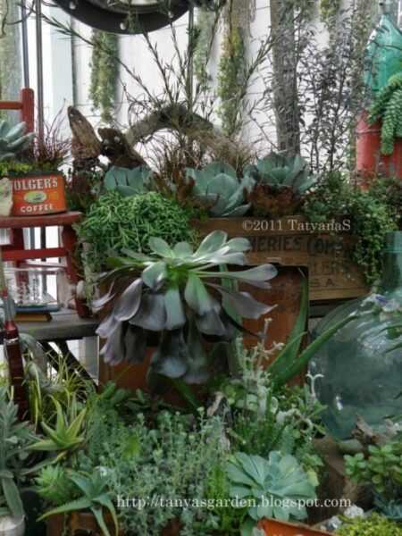 Succulents. Pictures at an exhibition – care