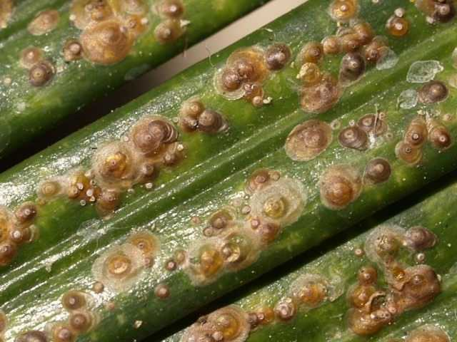 We save plants from scale insects and pseudo-scale insects - care