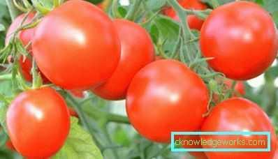 Caracteristicas De La Variedad De Tomates Richie Farmer