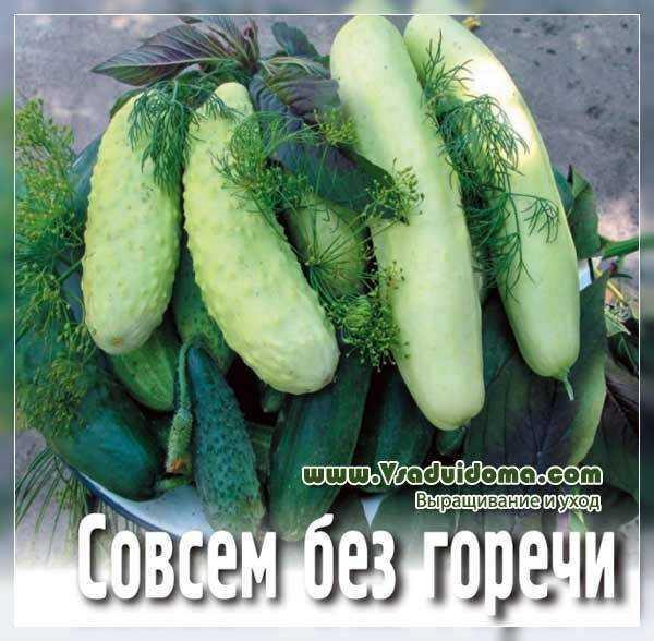 Características del pepino chino resistente al frío.